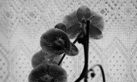 Orchidee im Küchenfenster